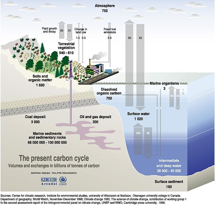 The present carbon cycle carlobattisti the present carbon cycle ccuart