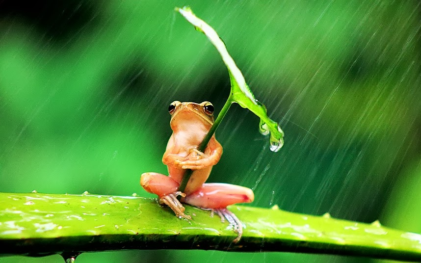 2015_04_15-02 frog with umbrella