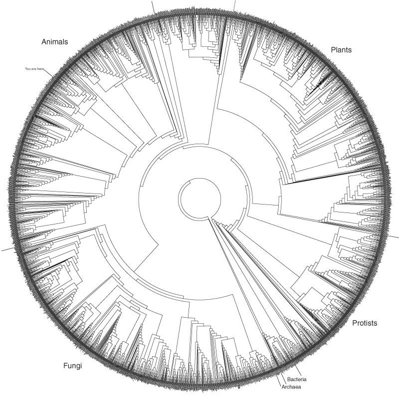 2015_04_17 tree of life
