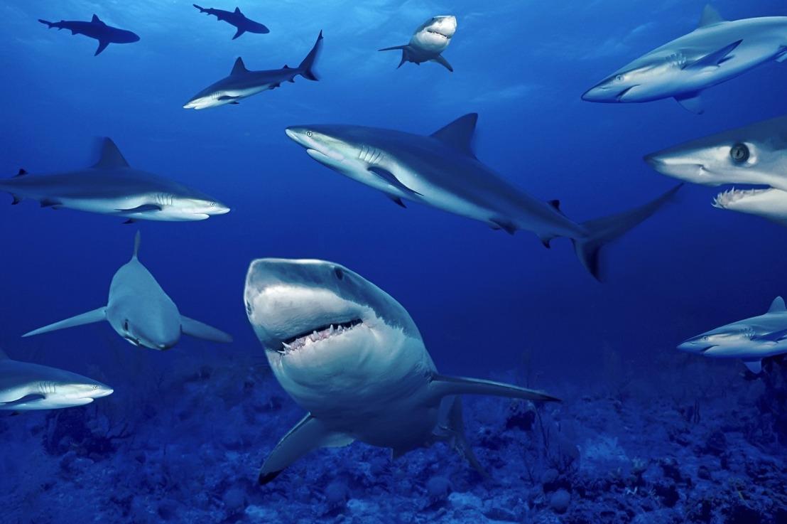 Arriva Shark Tank…