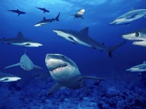 2015_04_29-01 Shark Tank