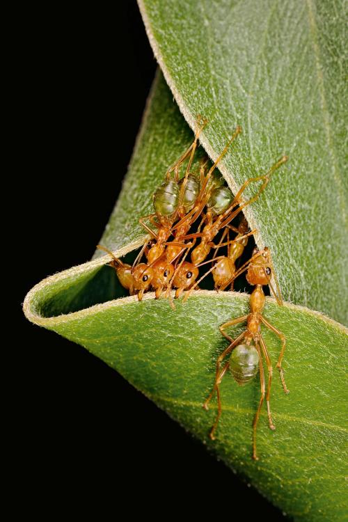 2015_05_17-04 ants